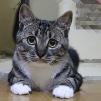 雀巢家的猫砂-猫咪主子们的新选择-普瑞纳 TIDY CATS泰迪 即效除臭型猫砂