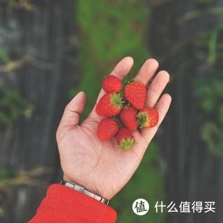 摘草莓的时候随手拍,手机后期调色。