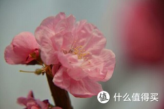 一般的机子,一般的镜头,新鲜的花朵
