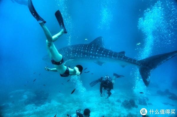 与鲸鲨同游,还有沙丁鱼风暴?这4个海豚圣地好玩到你不想走