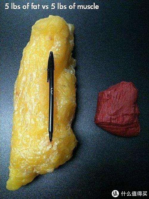 同样质量的肌肉和脂肪,差距真的好大。