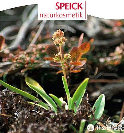 来自大自然的养护--SPEICK海外旗舰店年货大礼包众测报告