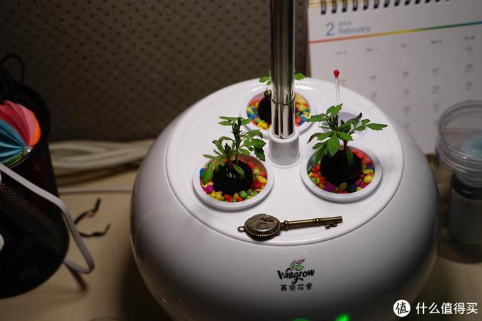 重新定义养花过程--三生石  智能养花机