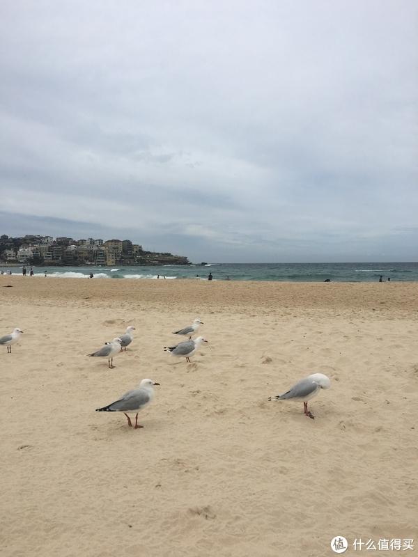 沙滩上的的海鸟