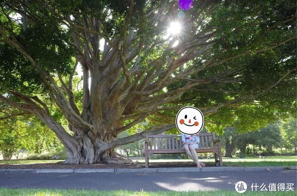 皇家植物园里一棵大树(理光GR2)