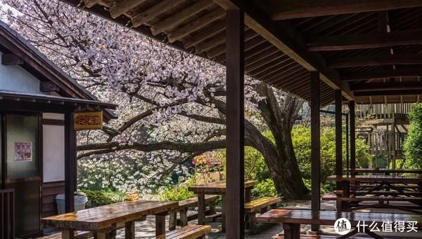 2018日本赏樱攻略,现在准备房价并不贵