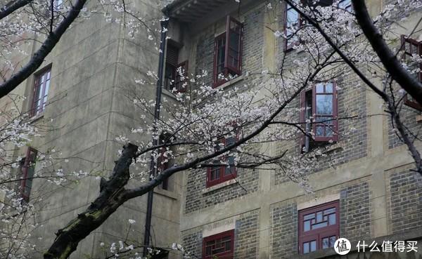 没办法去日本的,国内赏樱也不差,至少特价酒店都还有
