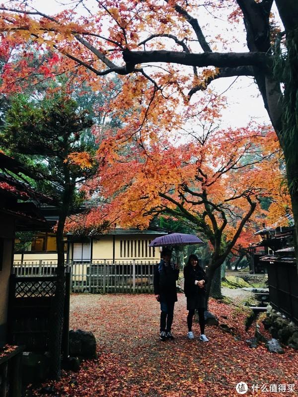 穷游富住劳逸结合的日本自助游 篇四:奈良公园小鹿乱撞,大阪环球影城指南