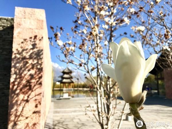 #剁主计划-北京#隐于雪山脚下的丽江悦榕庄:美景取悦双眼,SPA宠溺身心,更有超高性价比
