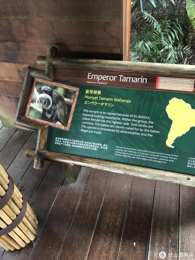 DAY3新加坡动物园