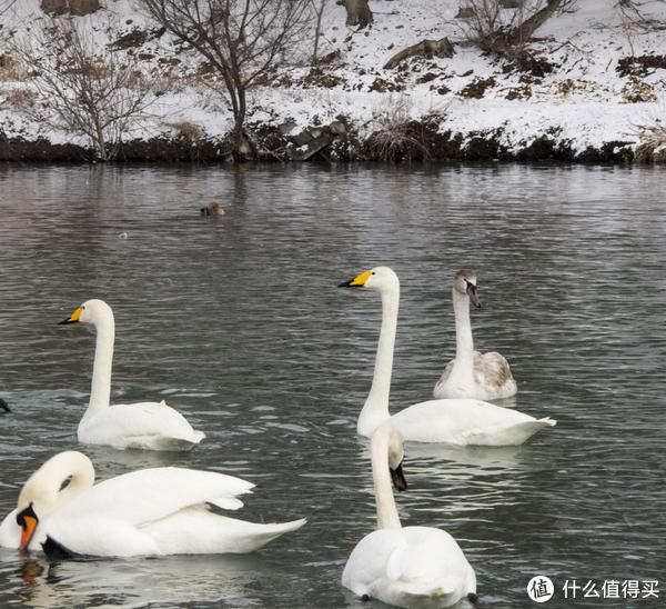 2018新春新疆伊犁行游记 篇二:天鹅泉篇