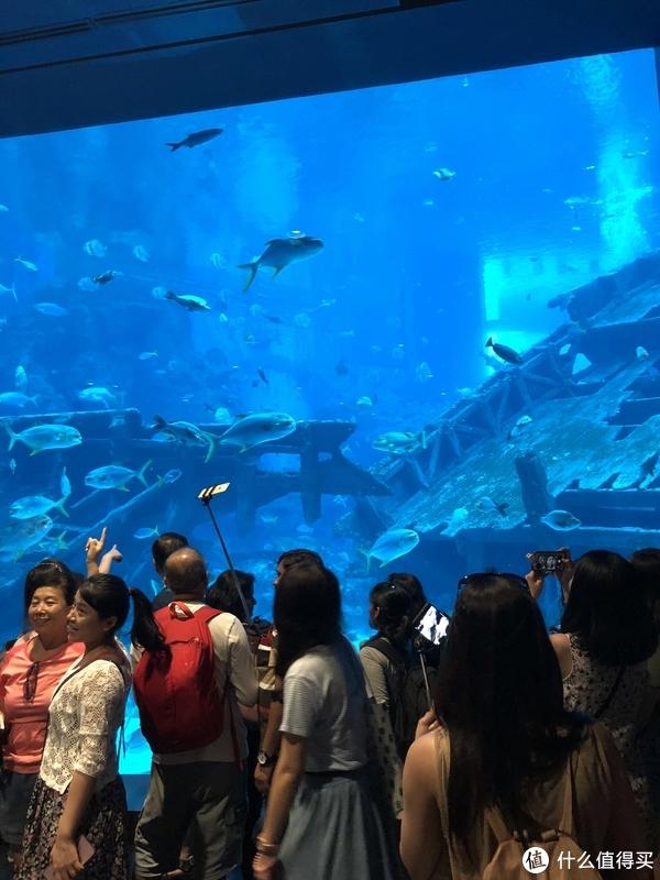 春节游记—新加坡普吉岛 篇四:DAY4 圣淘沙&SEA