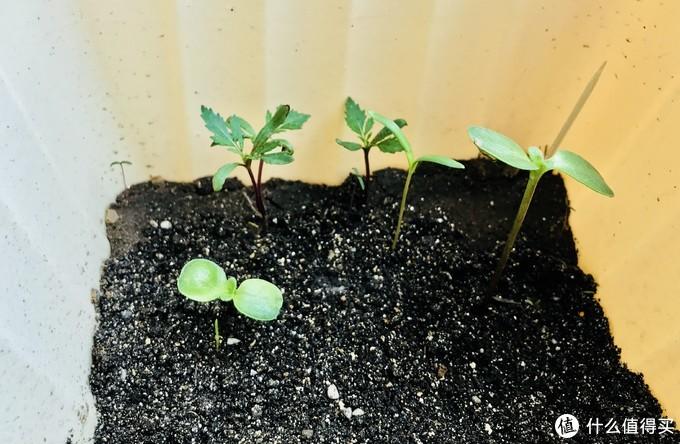 育种养花小神器:慕奈花舍 为懒人设计的智能养花机