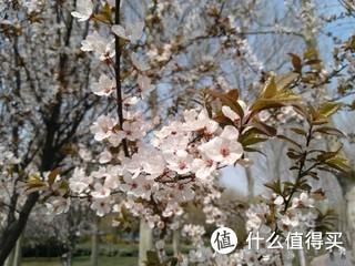 春天花会开 手机也能拍!