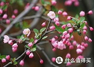 三月大运河畔一游,嫩柳拂起花叠翠,暖风熏得游人醉。