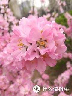 老手机的拍照效果也是很好的,春天真是一个美丽的季节[棒棒哒]