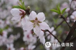 春风不来,三月的桃花不开。 你就是全世界 —-拍摄于杭州湘湖,20180325