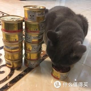 罐头等身成就达成,强制撸猫又一大招。