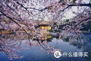 即使是工作日,鼋头渚的游人也很多,不过樱花很美,值得一去