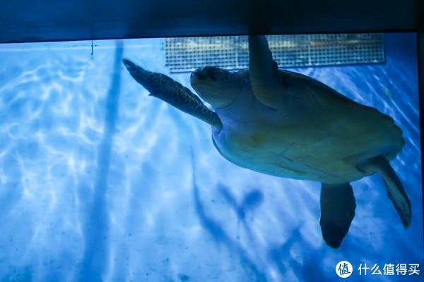 故地重游:2018年 北京动物园 半日游记