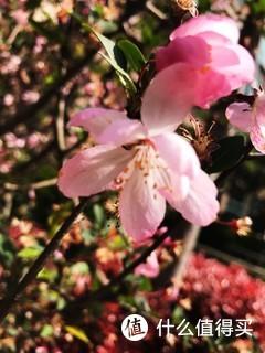 春工叶叶与丝丝,怕日嫌风不自持。 晓镜为谁妆未办,沁痕犹有泪臙脂。 垂丝海棠