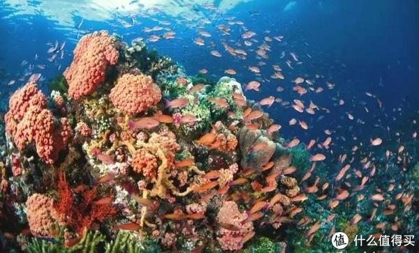 东南亚潜水考证哪家强?人少景美赛马代?性价比超高无人敌?这可能是最全的东南亚潜水考证指南!