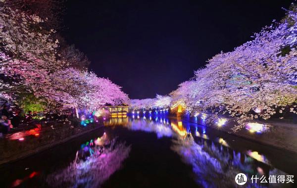 2018惠山的雪与鼋头渚的樱花