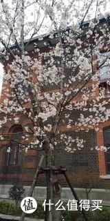 樱花已经凋谢,手机里还留存了路边随手拍的照片,仿佛把春天留在了手机里。