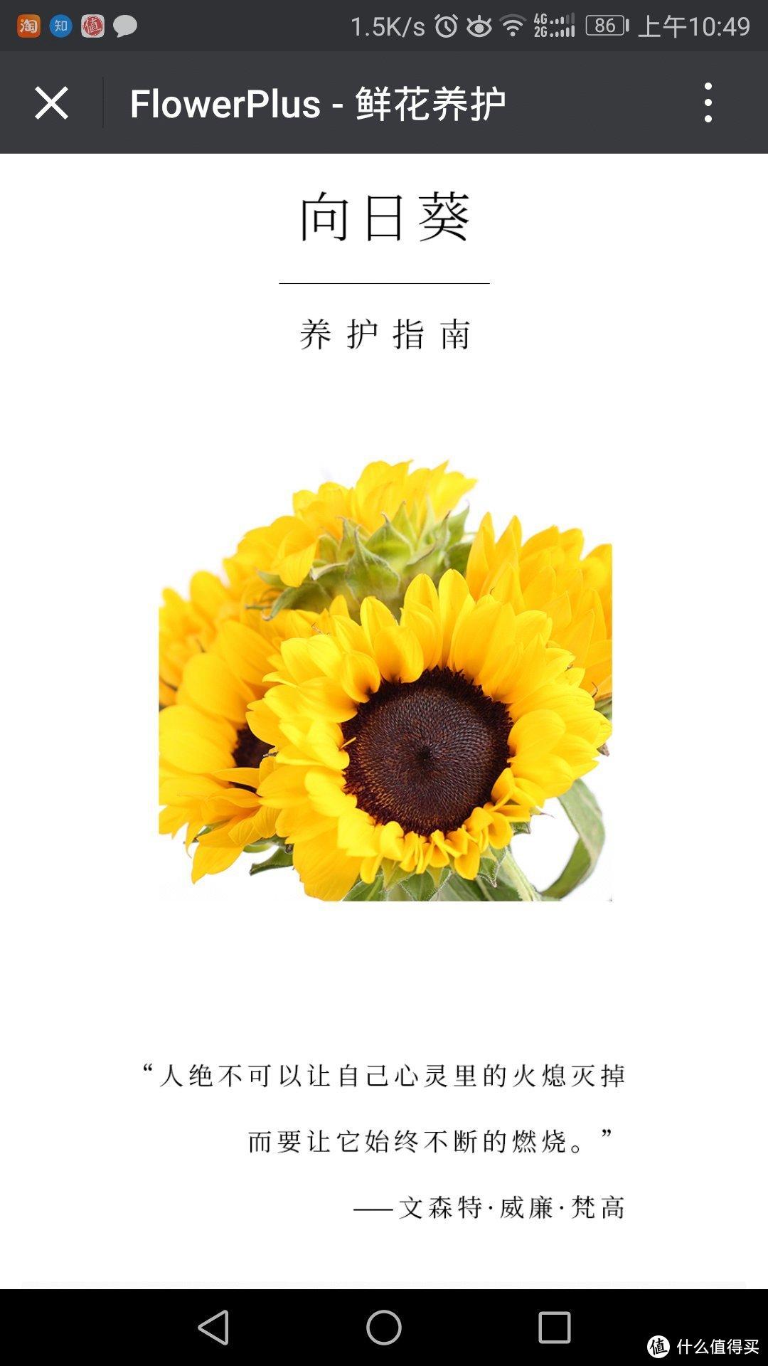 #原创新人#Flowerplus 花加 单品鲜花 开箱简评