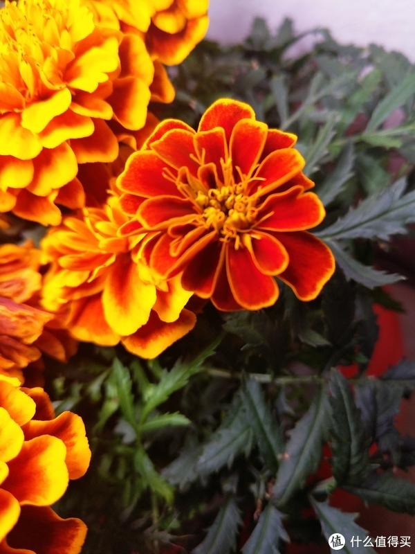 一个月出差二十八天,你也能够种盆好花