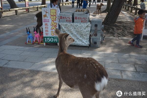 公园也很多卖鹿饼的地方