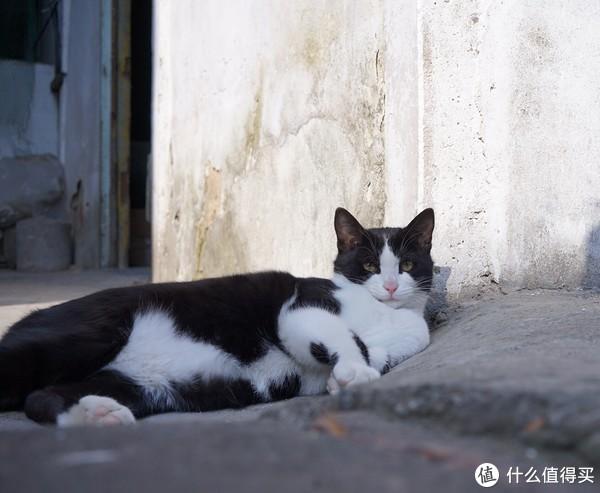 #剁主计划-宁波#从路边捡来一个主子:一个狗党的养猫图记