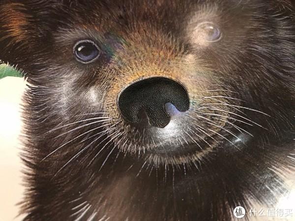 内页小熊鼻头材质
