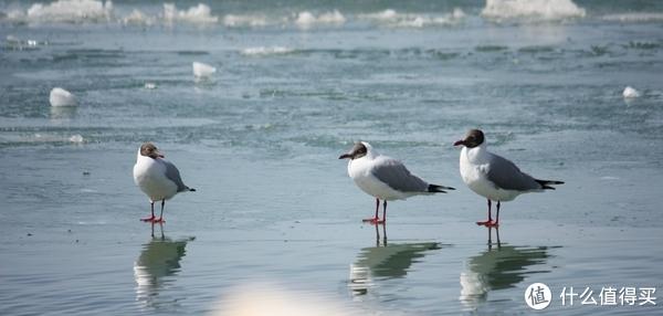 青海湖上,我的孤独如天堂的马匹