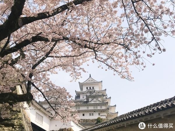 #剁主计划-上海#与剁友的姬情日本樱花佛系之旅