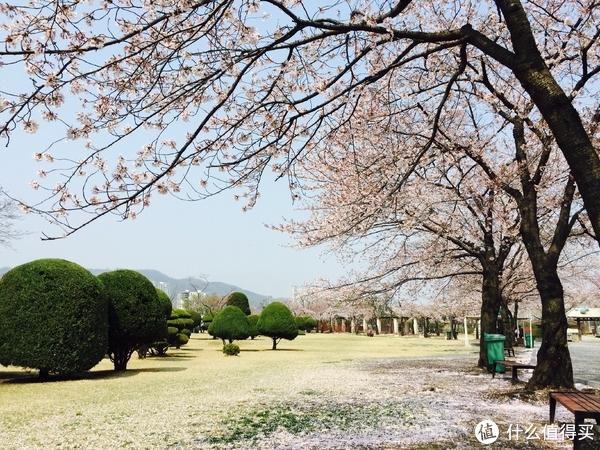 北海道樱花季,日本旅游必购清单