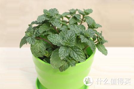手残星人、懒癌晚期就不适合养植物了?这些懒人植物肯定非常适合你!