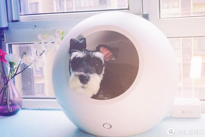 狗子是唯一一种花钱能买到的爱—PETKIT 小佩 冷暖窝 开箱体验