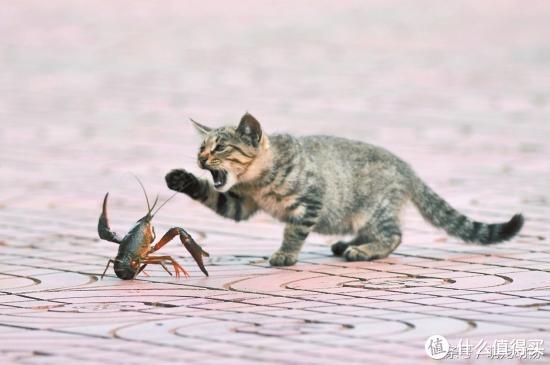 撩动吃货的心!3分钟小龙虾速成班来了!