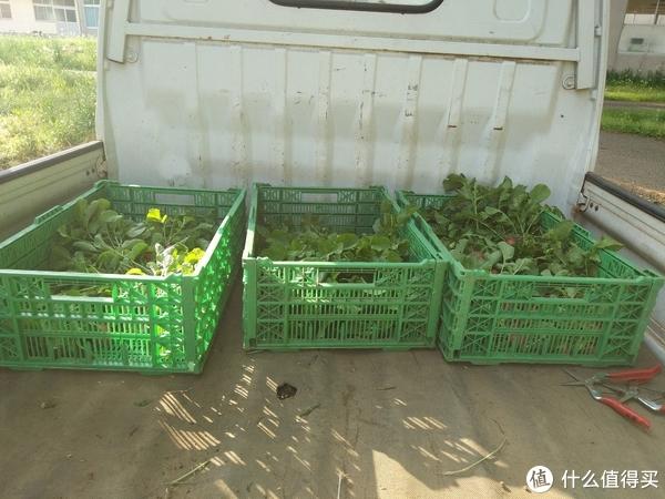 探访日本农业实践学园