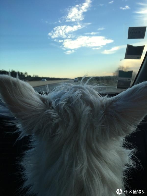 做一个带狗狗环游世界的铲屎官,内附养宠经验分享
