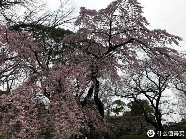 玩在樱花盛开前—3月东京关西8天游及可能有用的攻略