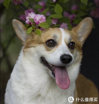 """带着狗狗去旅行攻略 篇一:春暖花开 带着小短腿去本溪""""绿石谷"""""""
