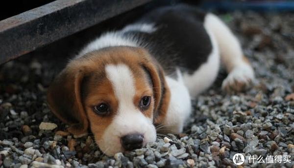 宠物圈 篇四:如何客观看待宠物绝育