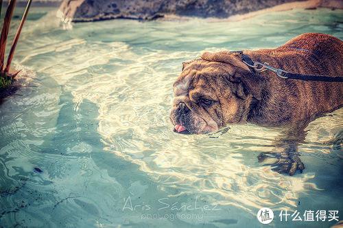 30分钟可致死 狗狗中暑不可小视