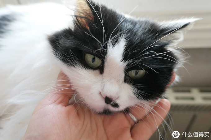618为长毛主子买礼物:清爽过夏!我的薅猫毛神器、猫粮与猫砂推荐