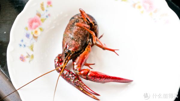 香辣小龙虾,在家也能做!这个夏天安排上了!
