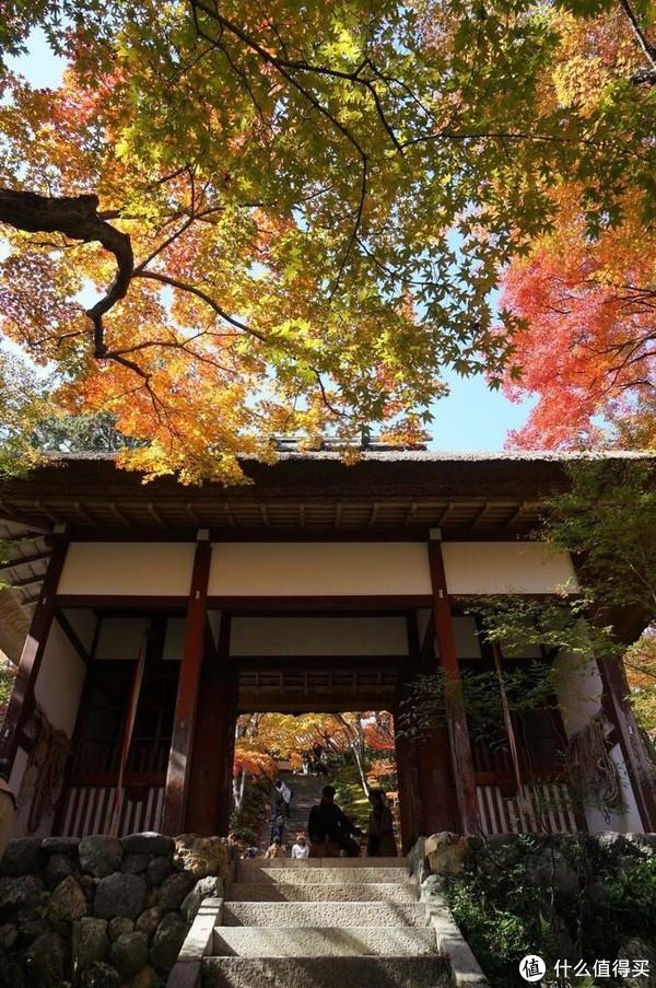 日本关西枫叶季旅游贴士