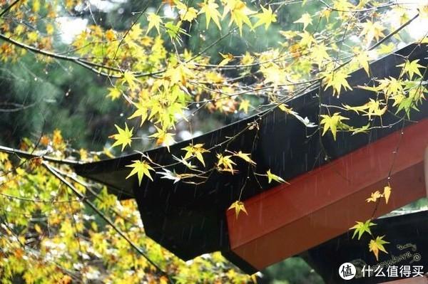 旅游 篇一:日本关西枫叶季旅游贴士