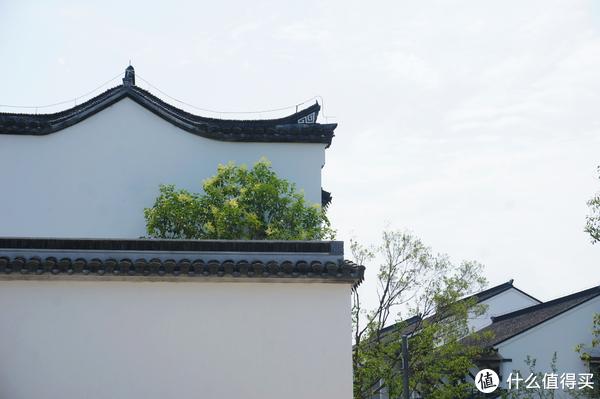 """新的周末好去处""""广富林文化遗址公园"""""""
